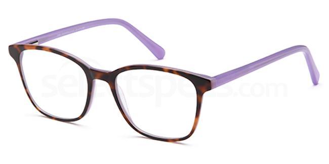 Havana/Lilac D69 Glasses, Brooklyn